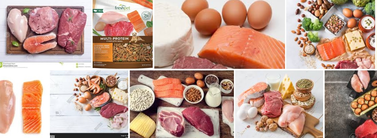 protein.jpg